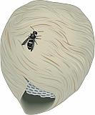 Hornet's Nest 01