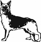 German Shepherd 001