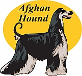 Afghan Hound 03