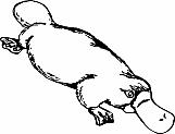 Platypus 01
