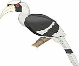 Hornbill 01