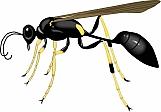 Wasp 02