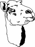 Camel 02