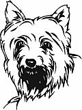 Silky Terrier 01