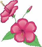 China Rose 01