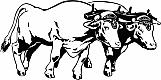 Oxen 01