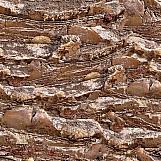 Tree Bark 20