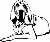 Bloodhound 02