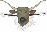Bull 06