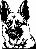 German Shepherd 004