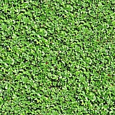 Ground Cover 03