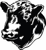 Bull 03