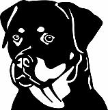 Rottweiler 001