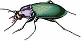 Beetle 02