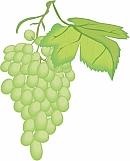 Grapes 03