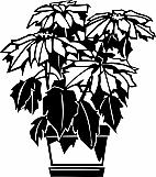 Poinsettia Plant 01