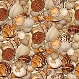 Seashells 02