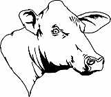 Cow 04