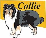 Collie 03