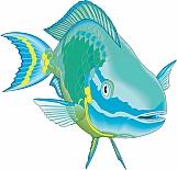 Parrotfish 01