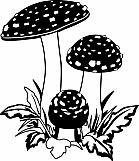 Mushrooms 02