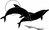 Dolphins 01
