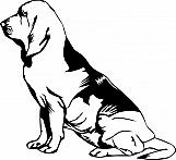 Bloodhound 03