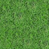 Grass 32