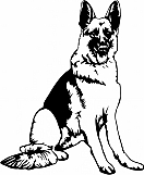 German Shepherd 005
