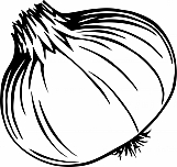 Onion 01