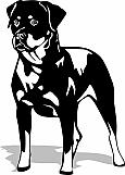 Rottweiler 002