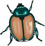 Beetle 03