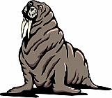 Walrus 01